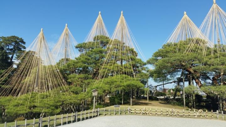 Pine trees in Kenrokuen Garden Kanazawa