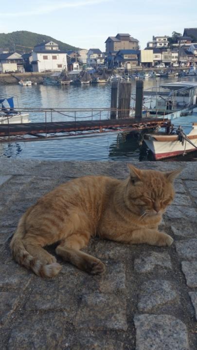 cat in tomonoura traveljapan