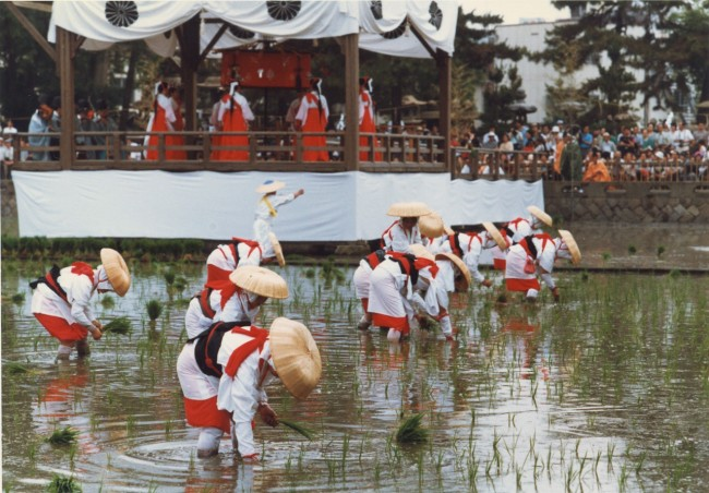 People in traditional costume and straw hats plant rice into a wet field in front of a ceremonial stage with monks as part of a Japanese summer matsuri festival