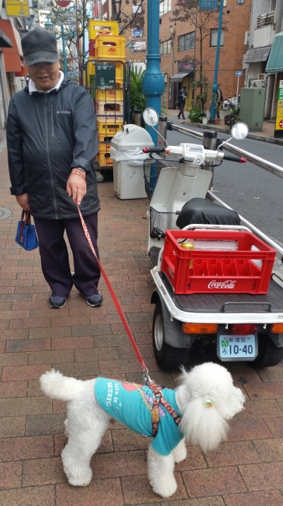 Japanese man walking his kawaii poodle wearing a t-shirt