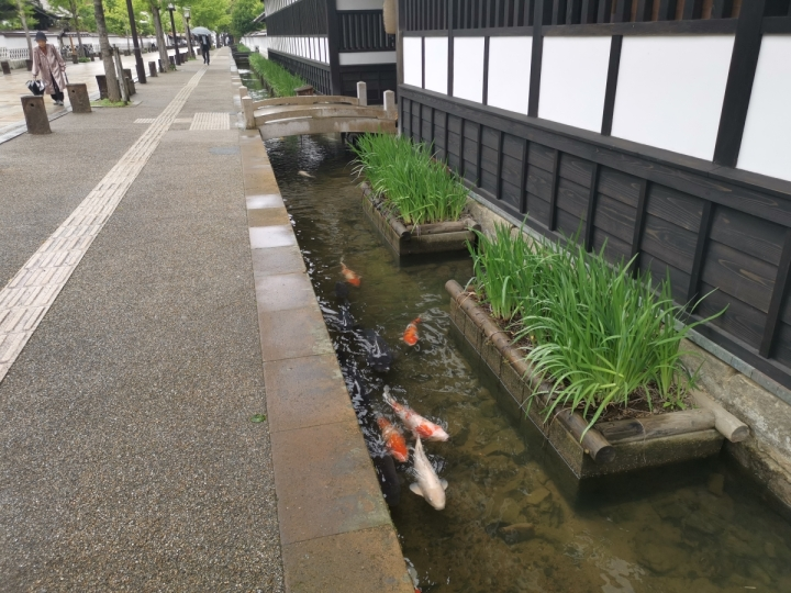 Canal with koi Tsuwano Shimane Japan
