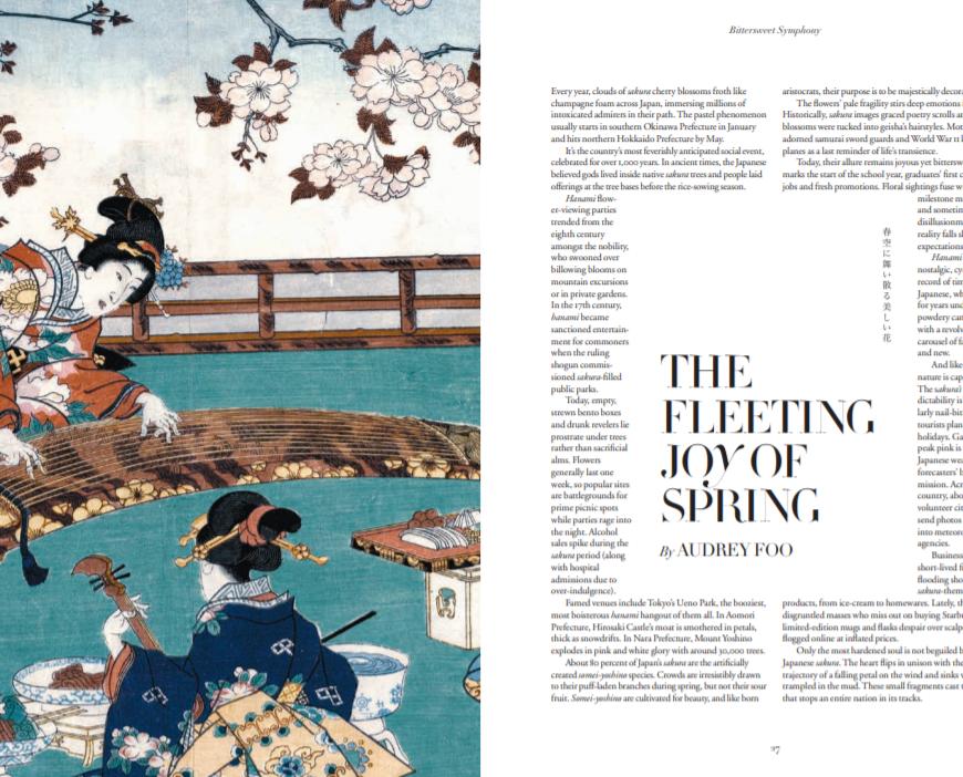 Old painting of Japanese people enjoying the sakura cherry blossoms
